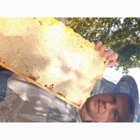 Продам мед разнотравие с подсолнухом