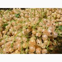 Продам саженцы ягодных кустарников: смородина, крыжовник, калина, малина, облепиха