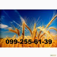 Закупаем отходы зерновых и масличных на переработку от 30 тонн по Украине
