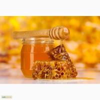 Закупаем свежий мед оптом
