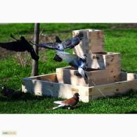 Высокие грядки Organic Box, ограждение для высоких грядок купить