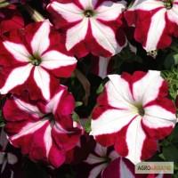 Продам семена петунии ампельная Лавина Пурпурная Звезда F1
