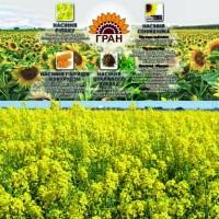 НВФ «Гран» пропонує насіння ріпаку РЕДСТОУН РС