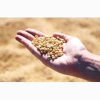 Принимаем сельхозпродукцию по всем регионам (СОЮ) ПОСТОЯННО