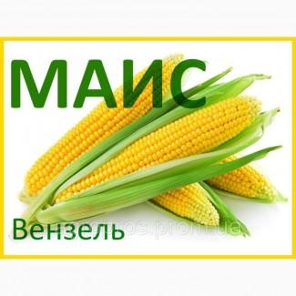 Продам гібрид кукурудзи ВЕНЗЕЛЬ (2017 РОКУ)