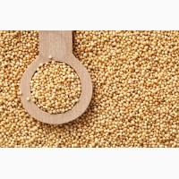 Купуємо зерно амаранту дорого в необмеженій кількості