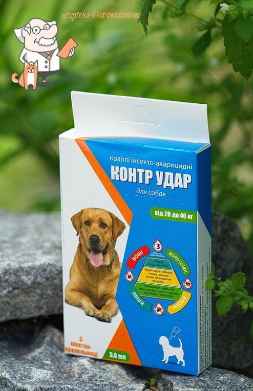 Шампуни против блох для собак: виды и как действуют