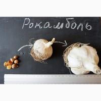 Рокамболь семена (детки) (10 штук) (слоновий чеснок) гигантский лук-чеснок, насіння
