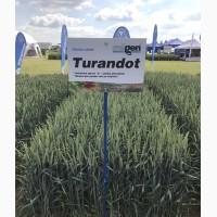 Насіння озимої пшениці Турандот, Чехія, Німеччина 1 репродукція