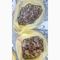 Продам сушені гриби та опеньки