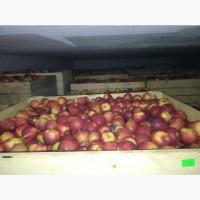 Продам яблука!!! Великий вибір та хороша якість