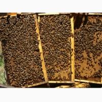 Продам бджоло пакети