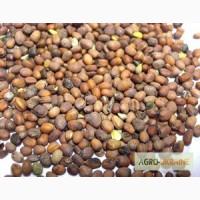 Продам семена РЕДЬКИ масличной. Цена договорная