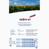 Насіння соняшнику Орфео, Штрубе (Strube) ур 2018 р - найвищий вихід олії з гектару