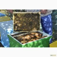 Продам пчелосемьи, улики, мед, пыльца
