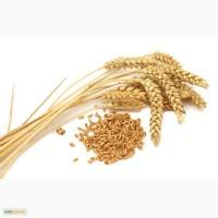 Куплю пшеницу фуражную и 2, 3 класс по луганской области