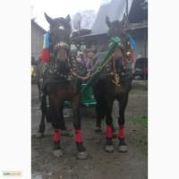 Продати коней