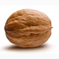 Закупаем грецкий орех 2017