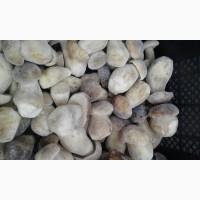 Продам Білі гриби 1 сорт