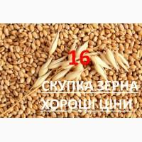 Дорого купим кукурудзу по Закарпатській області, яка не відповідає показникам ДСТУ