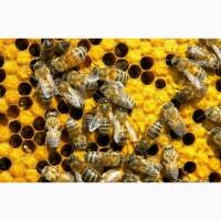 Продам бджолосім#039;ї. Тернопільська область. Недорого