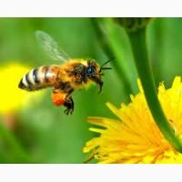 Закупка мед оптом
