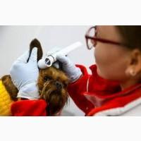Вызов ветеринара на дом, лечение с/х животных, всех видов, любой сложности
