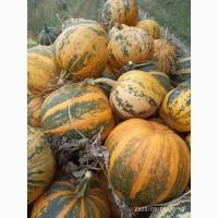 Українська багатоплідна насіння гарбуза для посіву