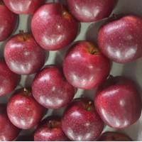 Зимняя прививка яблони любой сорт под заказ ФГ
