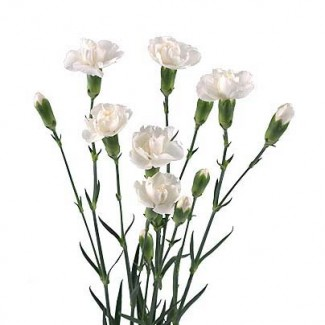Гвоздика, лілія, альстромерія, хризантема