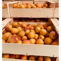 АБРИКОСЫ. Косточковые фрукты от испанского производителя