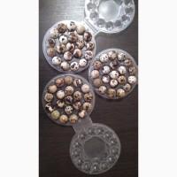 Перепелине яйце столове
