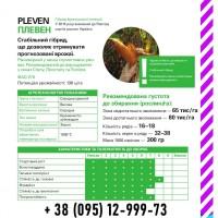 Насіння кукурудзи. Pleven / Плевен ФАО 270 (Maisadour) 2019