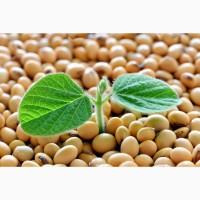 Пропонуємо високоякісне насіння сої