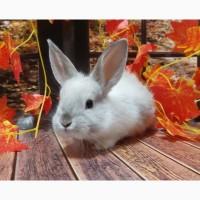 Кролик декоративный. Ручные малыши крольчата. Лучший питомец для деток и не только