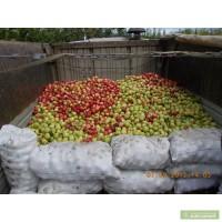 Продам яблоки зимних сортов на переработку
