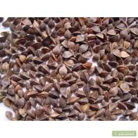 Реалізуємо насіння ярої пшениці, ячменю, гречки, овса, гороху