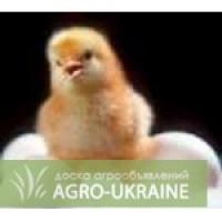 Продам Суточных цыплят бройлера. Гавриловка.