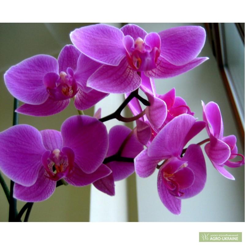 Орхидеи стоимость цветка