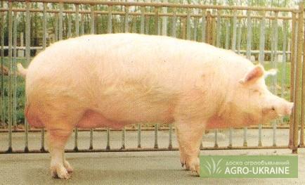 Royal Canin (Роял Канин) - гипоаллергенная диета для собак