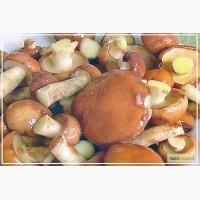 Продам гриби: Маслюк варений (Маслёнок)
