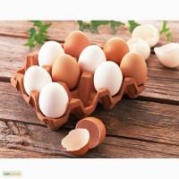 КУПЛЮ в большом количестве куриные яйца С-1 и отборные