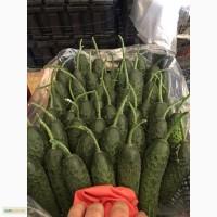 Овощи от фабрики производителя Турции