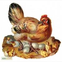 Премикс для курей несучек 2% (цыплята и продуктивный период)