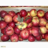 Предлагаем яблоки в ассортименте, г.Кривой Рог