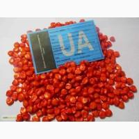 Семена кукурузы Моника 350 ФАО – 350
