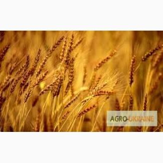 Закупка пшеницы, по всем Регионам