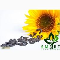 Смарт Агро Инвест» закупает семена подсолнечника дорого