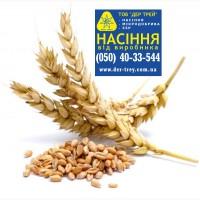 Семена озимого ячменя Дев#039;ятий вал, урожай 2017 года от компании Дер Трей