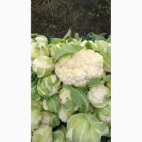 Продам цветную капусту